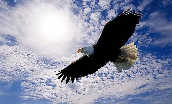 起業家に必要な鳥の目線。個人ビジネスにおいて特定分野の未来を創造し構築する