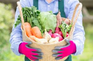 農業の開業資金と黒字経営に成功するコツまとめ